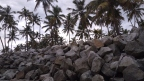 Stones and palm trees